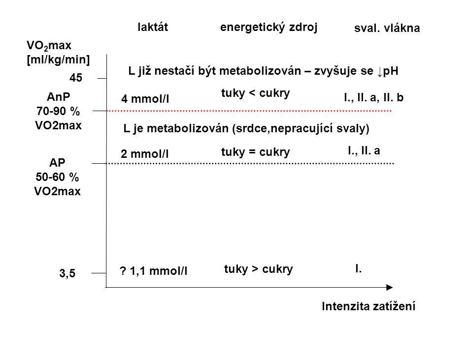 laktát energetický zdroj. sval. vlákna. VO2max. [ml/kg/min] L již nestačí být metabolizován – zvyšuje se ↓pH.